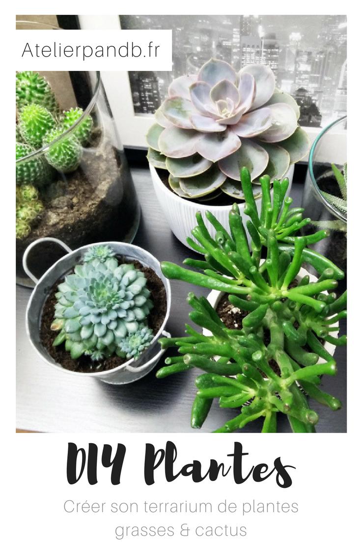 diy-plantes-terrarium