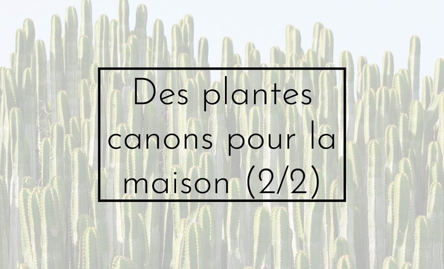 plantes canons
